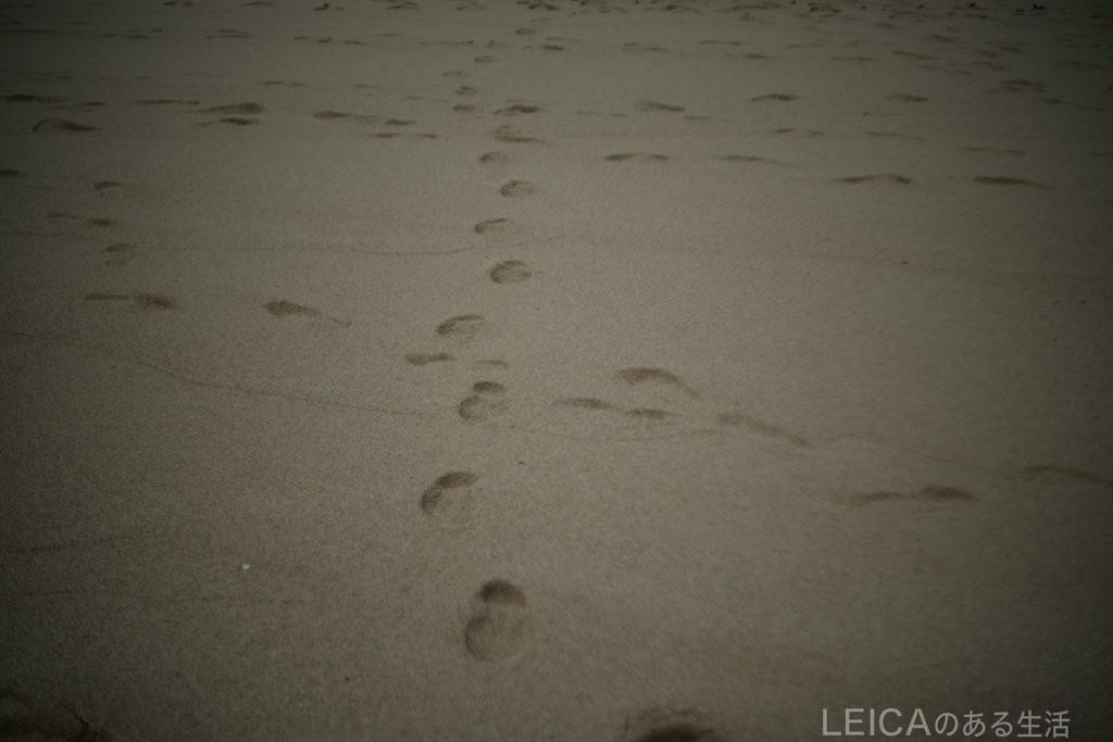 Leica SL + Summar L50mm F2